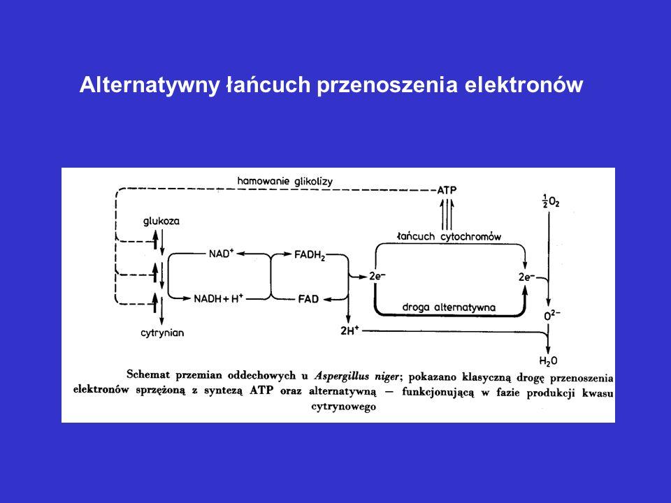 Alternatywny łańcuch przenoszenia elektronów
