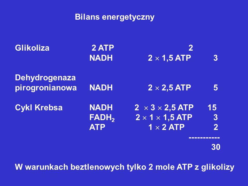 Bilans energetyczny Glikoliza 2 ATP2 NADH 2 1,5 ATP 3 Dehydrogenaza pirogronianowaNADH 2 2,5 ATP 5 Cykl KrebsaNADH 2 3 2,5 ATP 15 FADH 2 2 1 1,5 ATP3