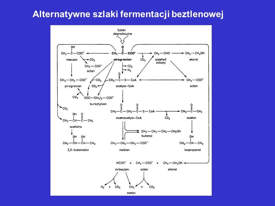 Alternatywne szlaki fermentacji beztlenowej