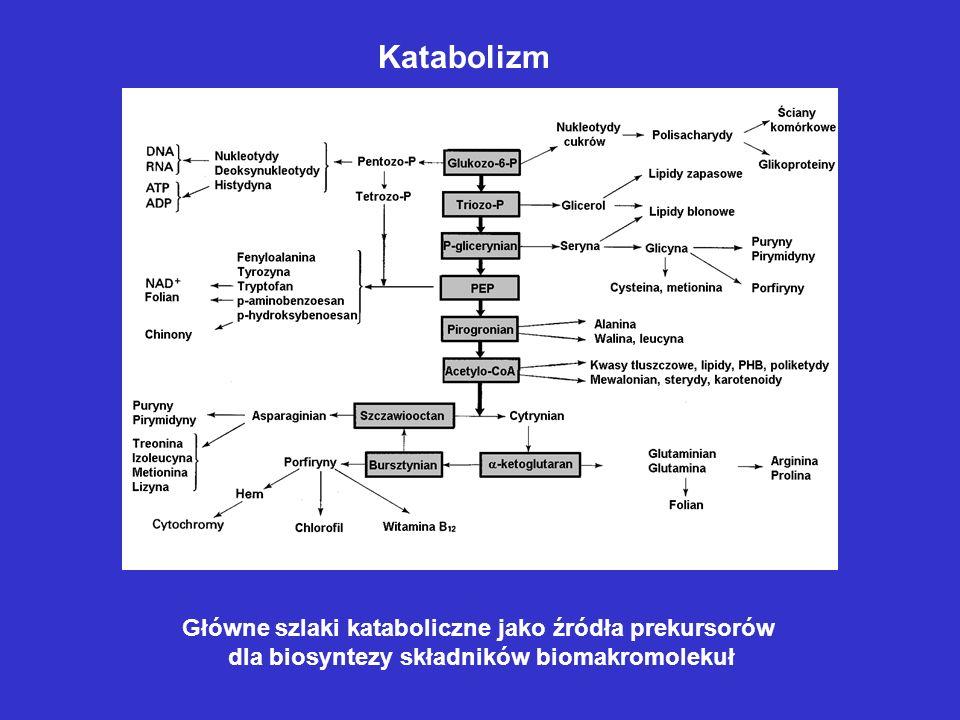 Główne szlaki kataboliczne jako źródła prekursorów dla biosyntezy składników biomakromolekuł Katabolizm