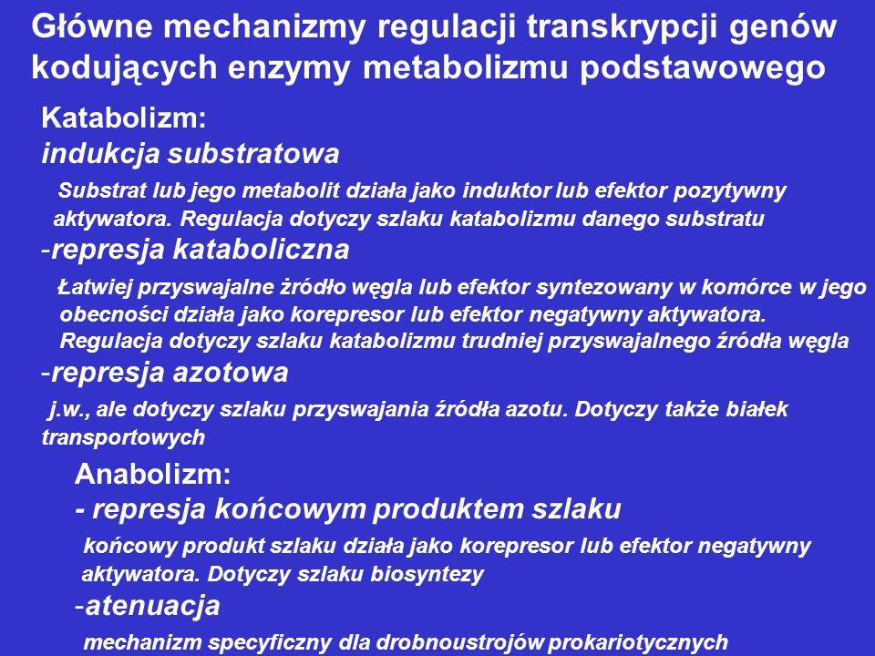 Główne mechanizmy regulacji transkrypcji genów kodujących enzymy metabolizmu podstawowego Katabolizm: indukcja substratowa Substrat lub jego metabolit