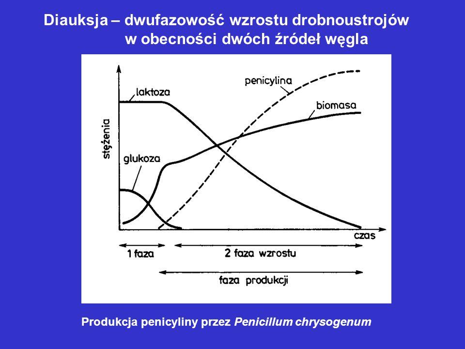 Diauksja – dwufazowość wzrostu drobnoustrojów w obecności dwóch źródeł węgla Produkcja penicyliny przez Penicillum chrysogenum