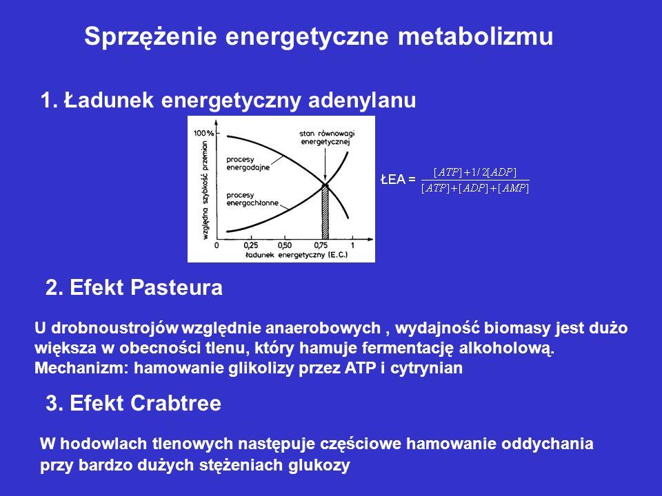 Sprzężenie energetyczne metabolizmu 1. Ładunek energetyczny adenylanu 2. Efekt Pasteura U drobnoustrojów względnie anaerobowych, wydajność biomasy jes