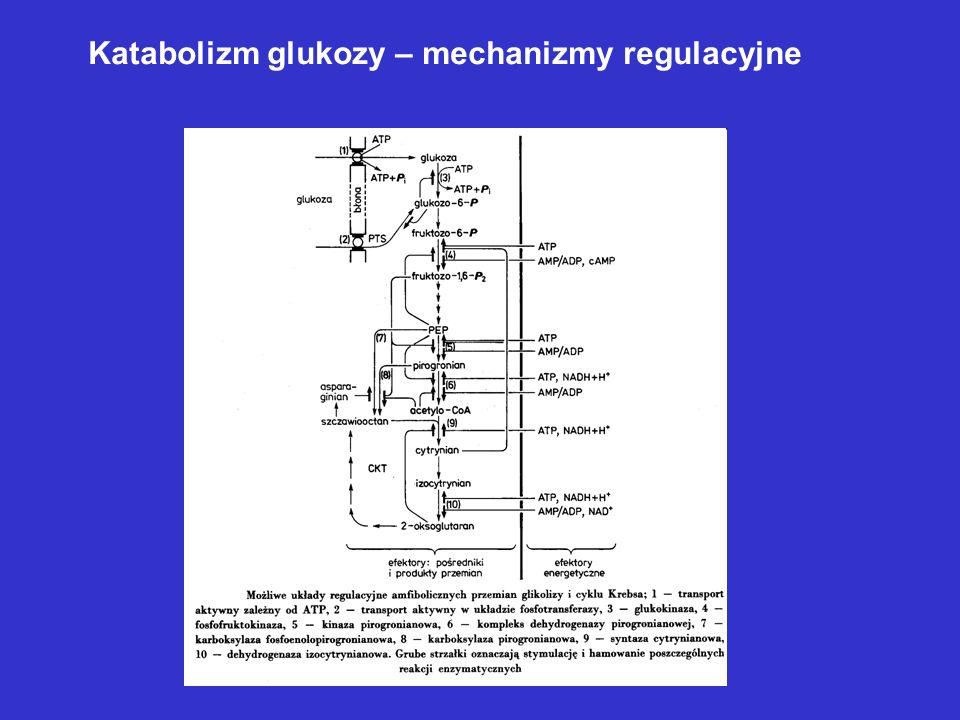 Katabolizm glukozy – mechanizmy regulacyjne