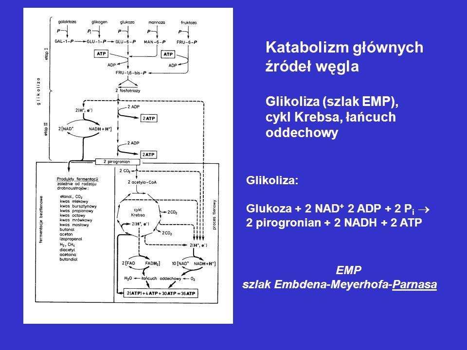 Katabolizm głównych źródeł węgla Glikoliza (szlak EMP), cykl Krebsa, łańcuch oddechowy Glikoliza: Glukoza + 2 NAD + 2 ADP + 2 P i 2 pirogronian + 2 NA