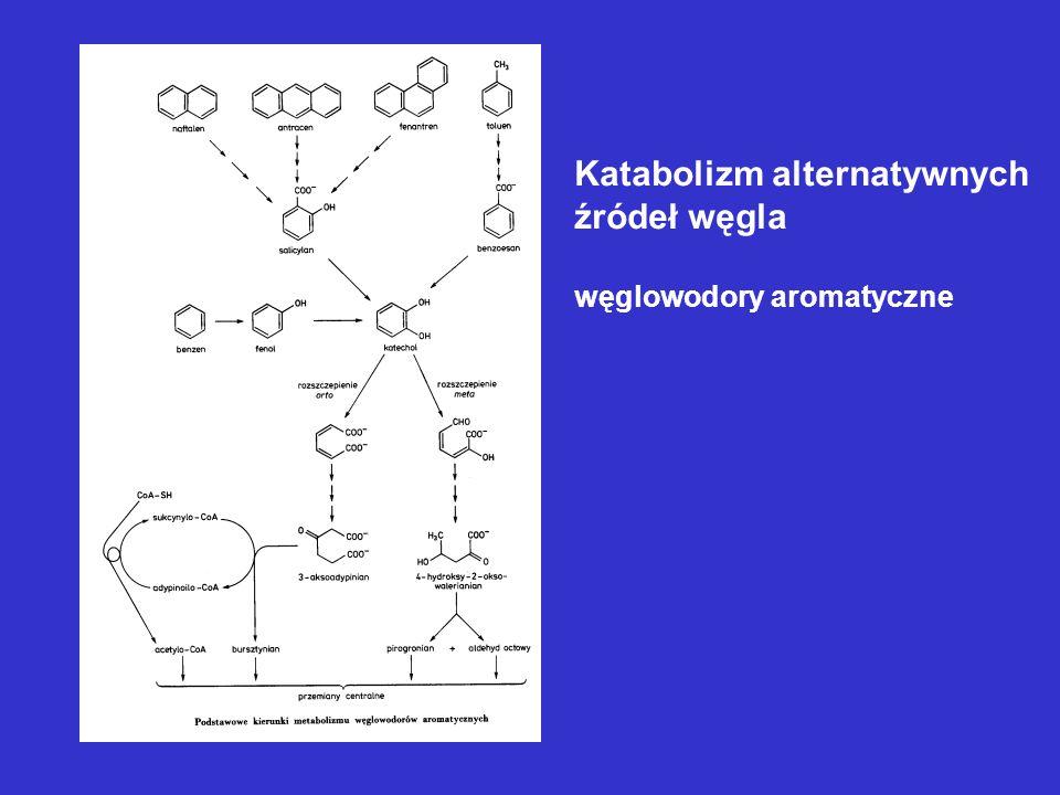 Katabolizm alternatywnych źródeł węgla węglowodory aromatyczne