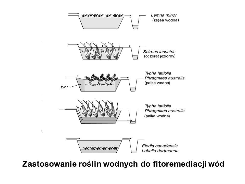 Zastosowanie roślin wodnych do fitoremediacji wód