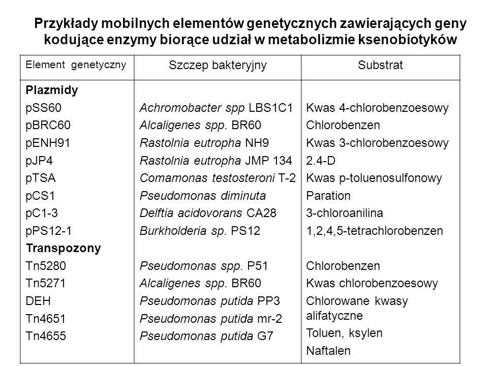 Przykłady mobilnych elementów genetycznych zawierających geny kodujące enzymy biorące udział w metabolizmie ksenobiotyków Element genetyczny Szczep ba
