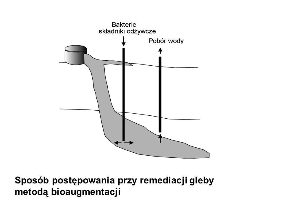 Sposób postępowania przy remediacji gleby metodą bioaugmentacji