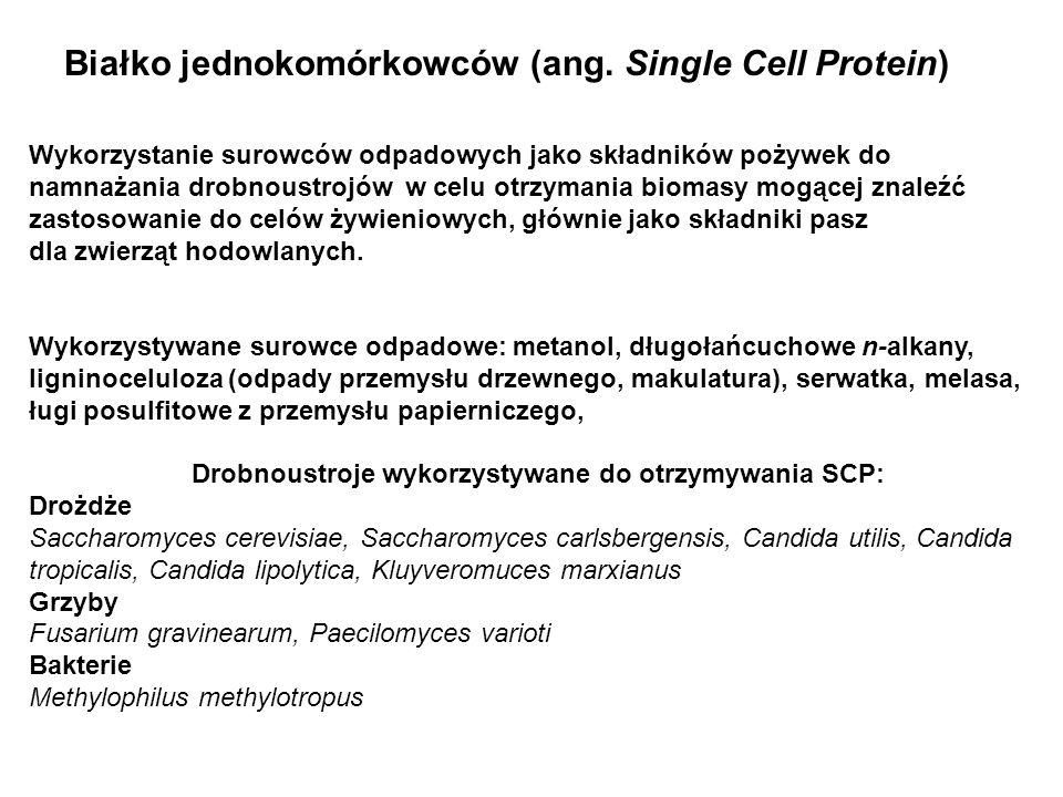 Białko jednokomórkowców (ang. Single Cell Protein) Wykorzystanie surowców odpadowych jako składników pożywek do namnażania drobnoustrojów w celu otrzy