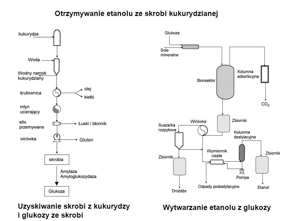 Otrzymywanie etanolu ze skrobi kukurydzianej Uzyskiwanie skrobi z kukurydzy i glukozy ze skrobi Wytwarzanie etanolu z glukozy