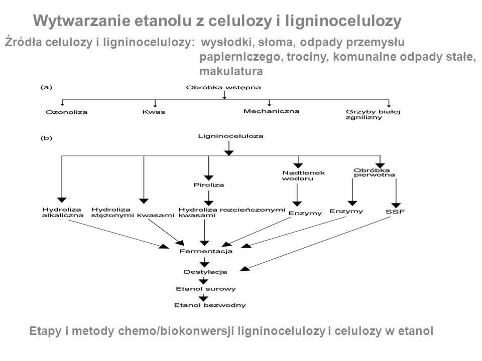 Wytwarzanie etanolu z celulozy i ligninocelulozy Źródła celulozy i ligninocelulozy: wysłodki, słoma, odpady przemysłu papierniczego, trociny, komunaln