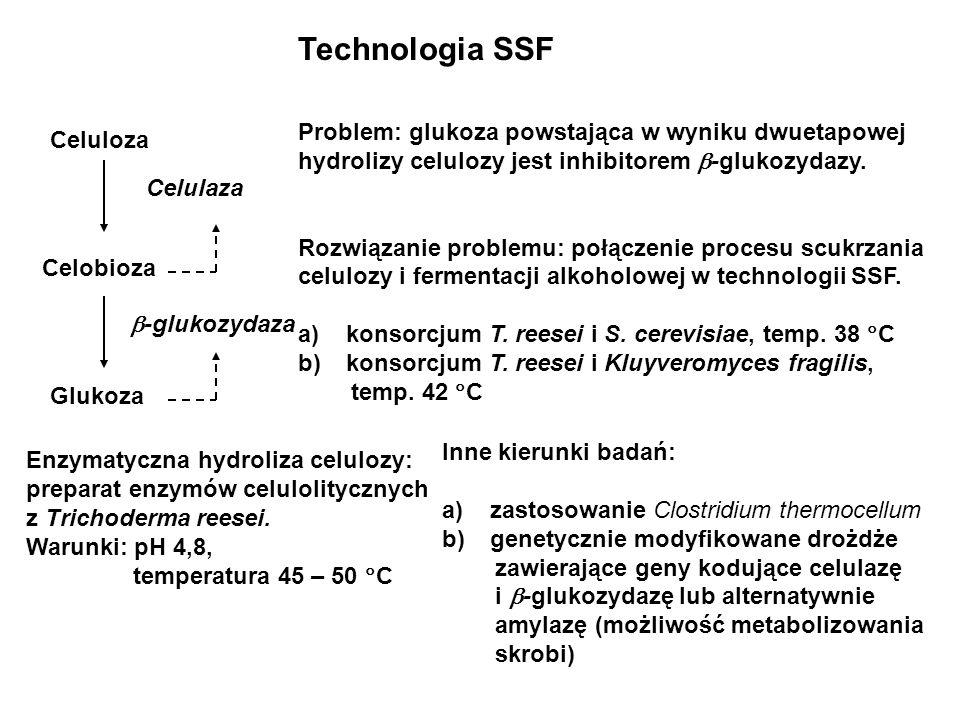 Technologia SSF Celuloza Celobioza Glukoza Celulaza -glukozydaza Problem: glukoza powstająca w wyniku dwuetapowej hydrolizy celulozy jest inhibitorem