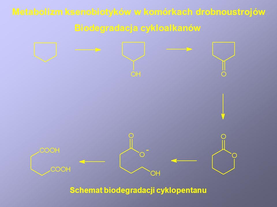 Mechanizm tworzenia kancerogennej pochodnej aflatoksyny Metabolizm ksenobiotyków u ssaków