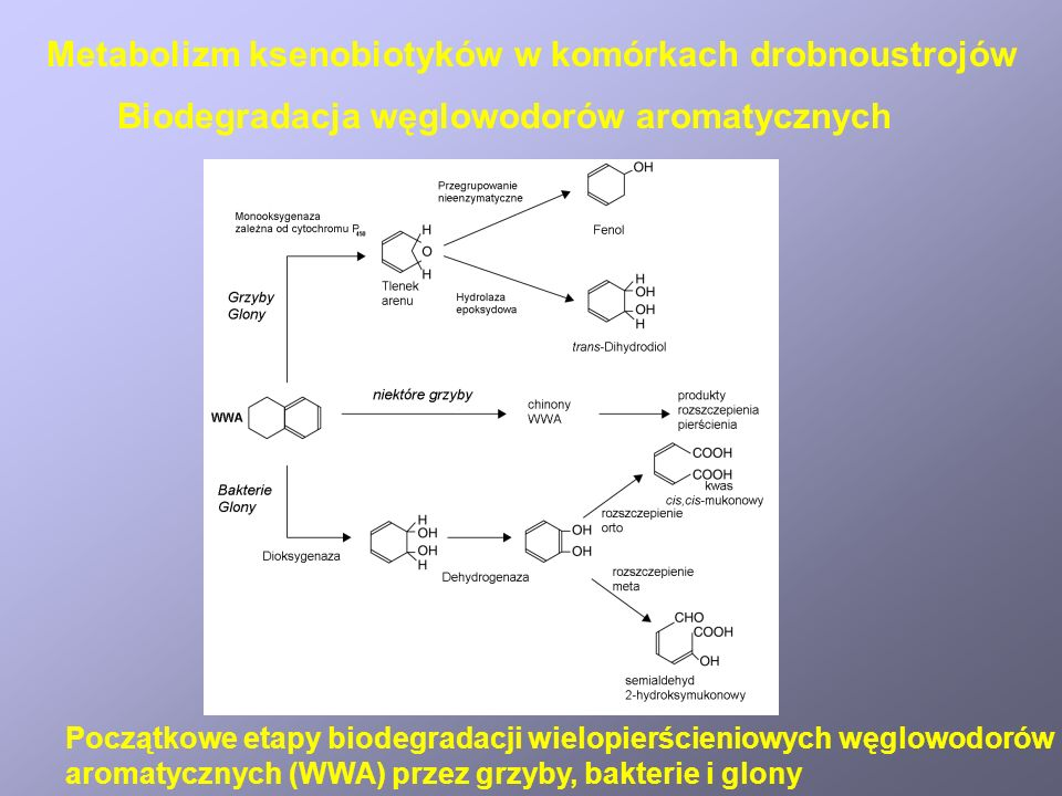 Struktury niektórych herbicydów, pestycydów i szczególnie toksycznych lub mutagennych ksenobiotyków Biodegradacja herbicydów i pestycydów Metabolizm ksenobiotyków w komórkach drobnoustrojów