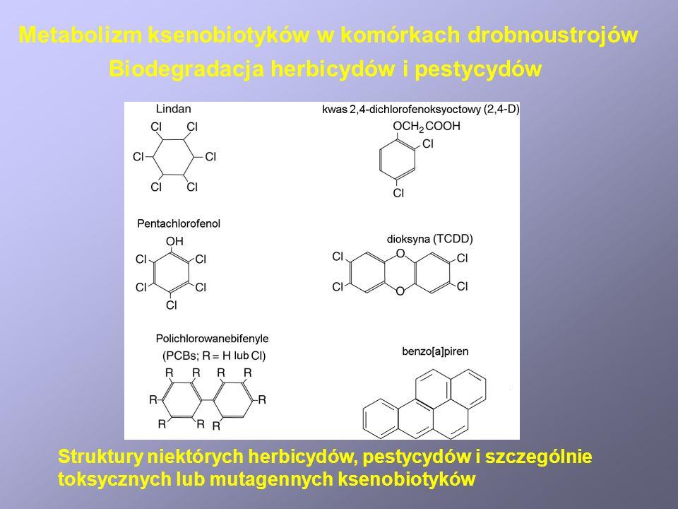 Czasy półtrwania DDT3 – 10 lat Dieldrin1 – 7 lat Heptachlor7 – 12 lat Atrazyna0,5 roku Toksafen10 lat Biodegradacja herbicydów i pestycydów Metabolizm ksenobiotyków w komórkach drobnoustrojów