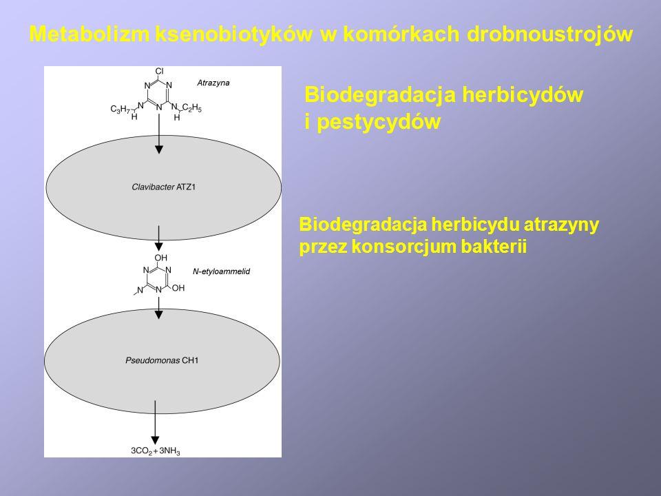 Bioakumulacja i biotransformacja metali Mechanizmy usuwania metali z roztworów wodnych przez drobnoustroje