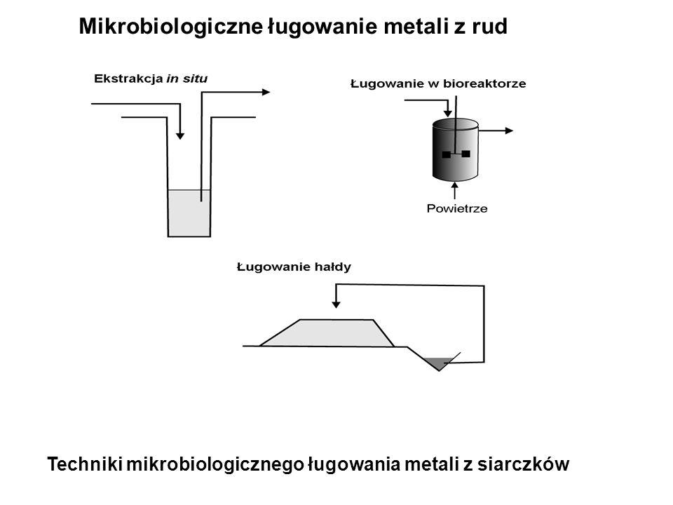 Techniki mikrobiologicznego ługowania metali z siarczków Mikrobiologiczne ługowanie metali z rud