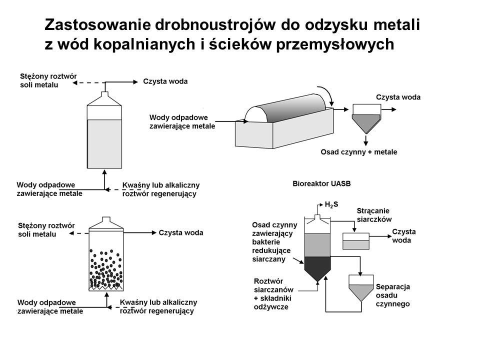 Zastosowanie drobnoustrojów do odzysku metali z wód kopalnianych i ścieków przemysłowych Schemat układu technologicznego do mikrobiologicznego ługowania i unieszkodliwiania osadów ściekowych