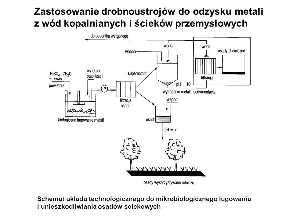 Zastosowanie drobnoustrojów do odzysku metali z wód kopalnianych i ścieków przemysłowych Schemat układu technologicznego do mikrobiologicznego ługowan