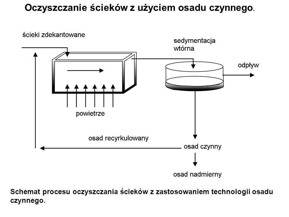 Schemat procesu oczyszczania ścieków z zastosowaniem technologii osadu czynnego. Oczyszczanie ścieków z użyciem osadu czynnego.