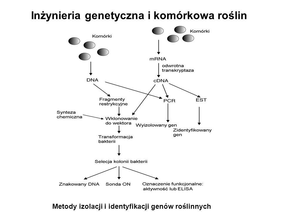 Metody izolacji i identyfikacji genów roślinnych Inżynieria genetyczna i komórkowa roślin