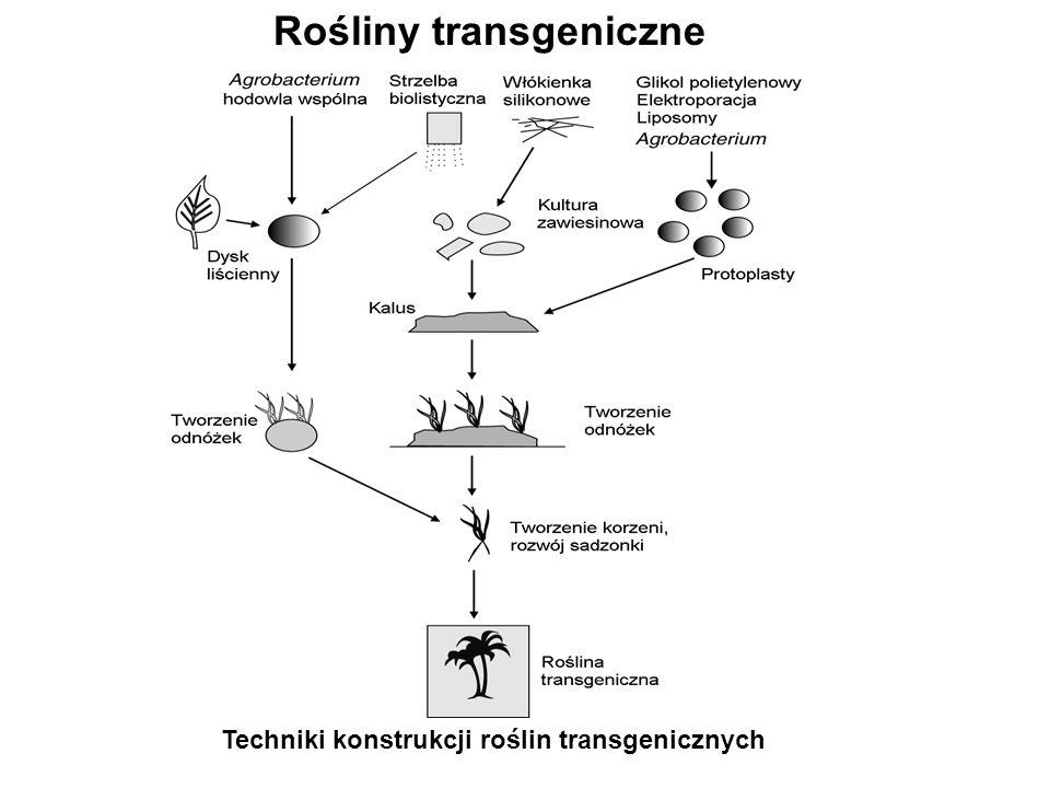 Techniki konstrukcji roślin transgenicznych Rośliny transgeniczne