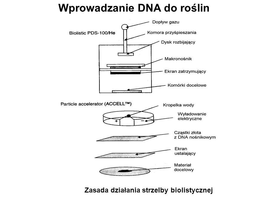 Wprowadzanie DNA do roślin Zasada działania strzelby biolistycznej