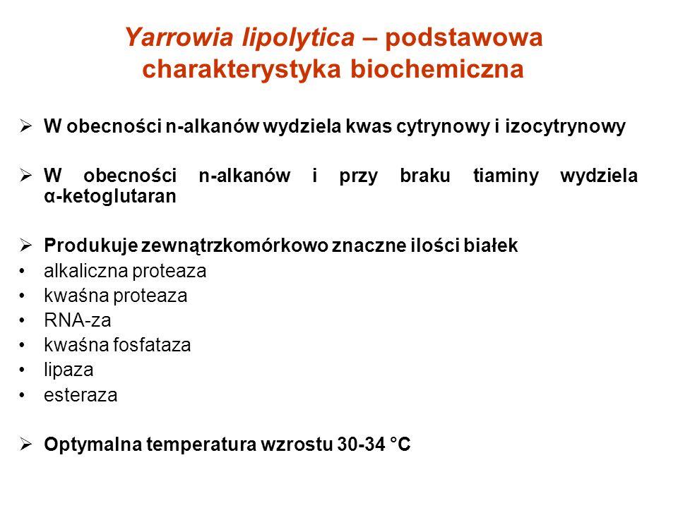 Yarrowia lipolytica – podstawowa charakterystyka biochemiczna W obecności n-alkanów wydziela kwas cytrynowy i izocytrynowy W obecności n-alkanów i prz