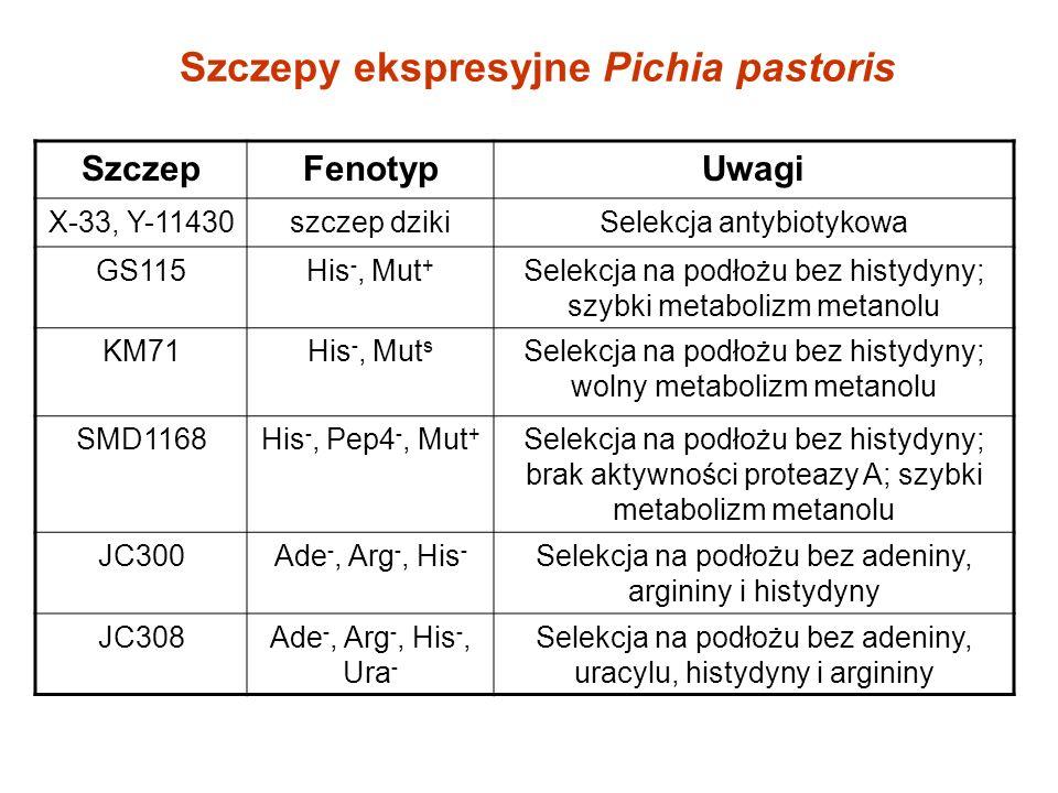 Szczepy ekspresyjne Pichia pastoris SzczepFenotypUwagi X-33, Y-11430szczep dzikiSelekcja antybiotykowa GS115His -, Mut + Selekcja na podłożu bez histydyny; szybki metabolizm metanolu KM71His -, Mut s Selekcja na podłożu bez histydyny; wolny metabolizm metanolu SMD1168His -, Pep4 -, Mut + Selekcja na podłożu bez histydyny; brak aktywności proteazy A; szybki metabolizm metanolu JC300Ade -, Arg -, His - Selekcja na podłożu bez adeniny, argininy i histydyny JC308Ade -, Arg -, His -, Ura - Selekcja na podłożu bez adeniny, uracylu, histydyny i argininy