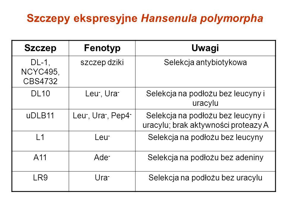 Szczepy ekspresyjne Hansenula polymorpha SzczepFenotypUwagi DL-1, NCYC495, CBS4732 szczep dzikiSelekcja antybiotykowa DL10Leu -, Ura - Selekcja na podłożu bez leucyny i uracylu uDLB11Leu -, Ura -, Pep4 - Selekcja na podłożu bez leucyny i uracylu; brak aktywności proteazy A L1Leu - Selekcja na podłożu bez leucyny A11Ade - Selekcja na podłożu bez adeniny LR9Ura - Selekcja na podłożu bez uracylu