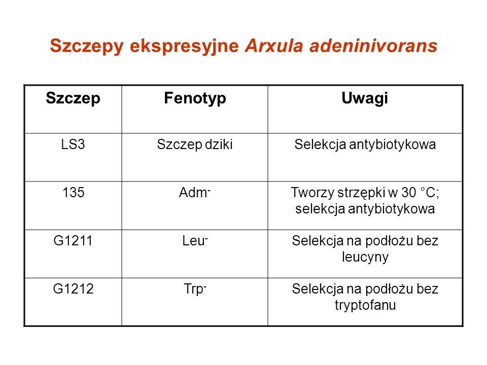 Szczepy ekspresyjne Arxula adeninivorans SzczepFenotypUwagi LS3Szczep dzikiSelekcja antybiotykowa 135Adm - Tworzy strzępki w 30 °C; selekcja antybiotykowa G1211Leu - Selekcja na podłożu bez leucyny G1212Trp - Selekcja na podłożu bez tryptofanu