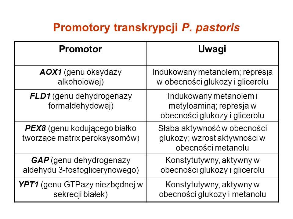 Promotory transkrypcji P. pastoris PromotorUwagi AOX1 (genu oksydazy alkoholowej) Indukowany metanolem; represja w obecności glukozy i glicerolu FLD1