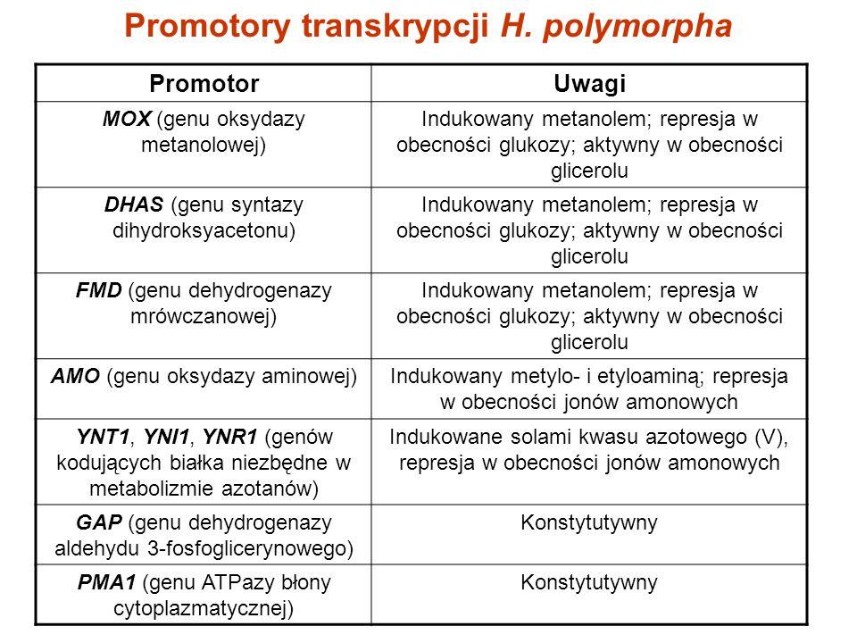 Promotory transkrypcji H. polymorpha PromotorUwagi MOX (genu oksydazy metanolowej) Indukowany metanolem; represja w obecności glukozy; aktywny w obecn