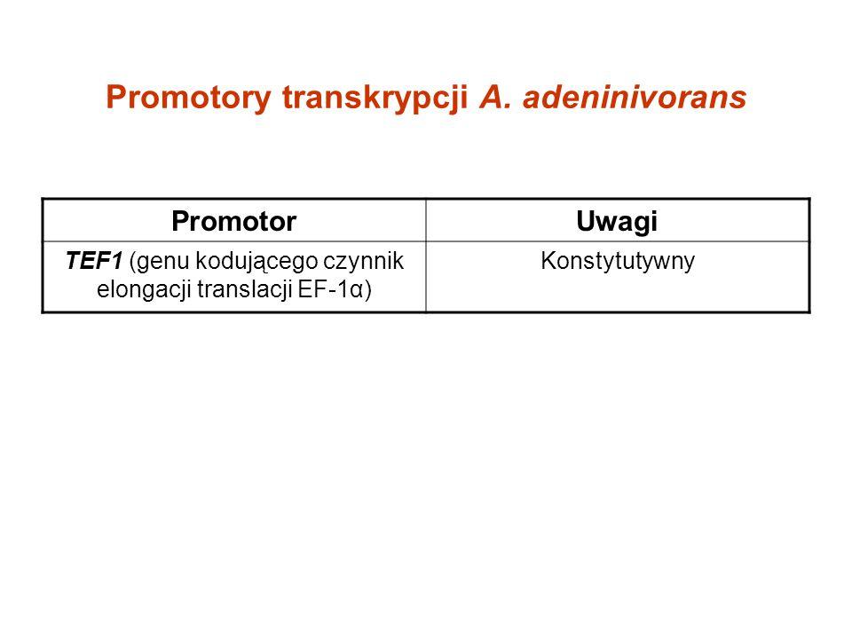 Promotory transkrypcji A. adeninivorans PromotorUwagi TEF1 (genu kodującego czynnik elongacji translacji EF-1α) Konstytutywny