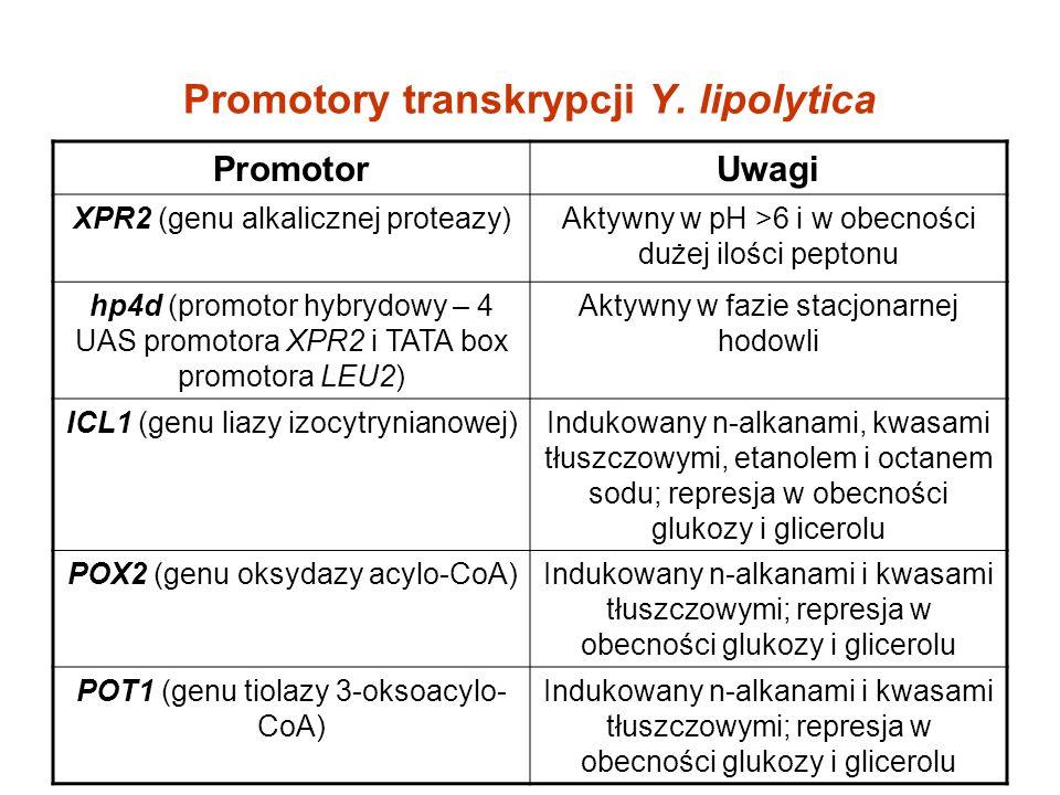 Promotory transkrypcji Y. lipolytica PromotorUwagi XPR2 (genu alkalicznej proteazy)Aktywny w pH >6 i w obecności dużej ilości peptonu hp4d (promotor h