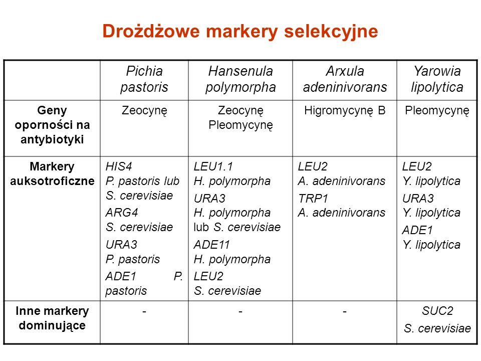 Drożdżowe markery selekcyjne Pichia pastoris Hansenula polymorpha Arxula adeninivorans Yarowia lipolytica Geny oporności na antybiotyki ZeocynęZeocynę Pleomycynę Higromycynę BPleomycynę Markery auksotroficzne HIS4 P.