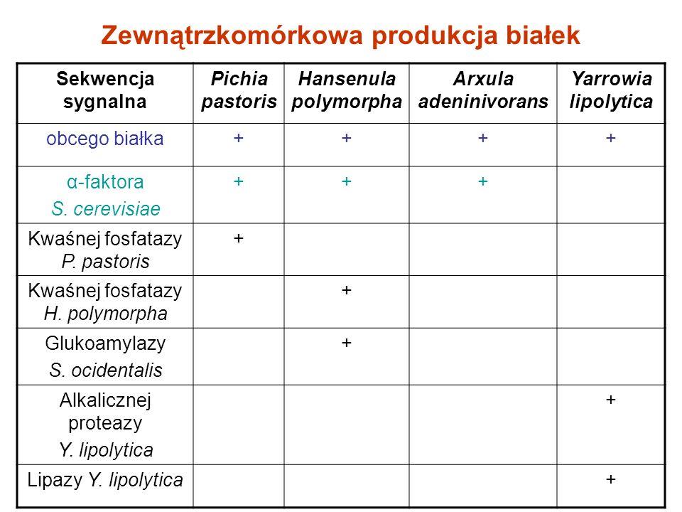 Sekwencja sygnalna Pichia pastoris Hansenula polymorpha Arxula adeninivorans Yarrowia lipolytica obcego białka++++ α-faktora S. cerevisiae +++ Kwaśnej