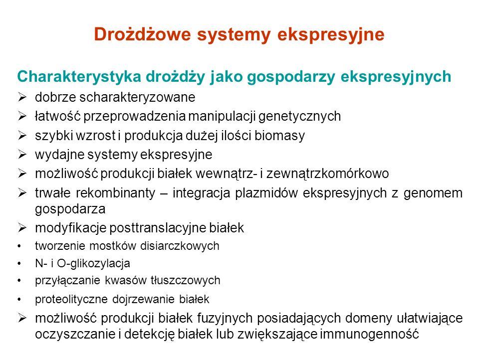 Produkcja interleukiny 6 (IL-6) 1.A.
