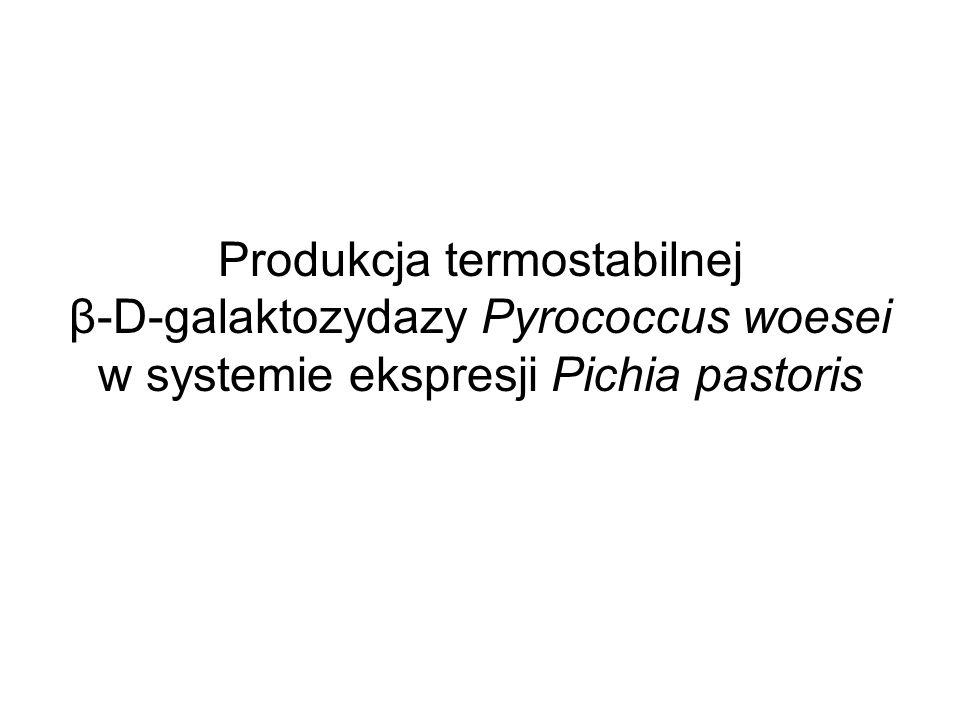 Produkcja termostabilnej β-D-galaktozydazy Pyrococcus woesei w systemie ekspresji Pichia pastoris