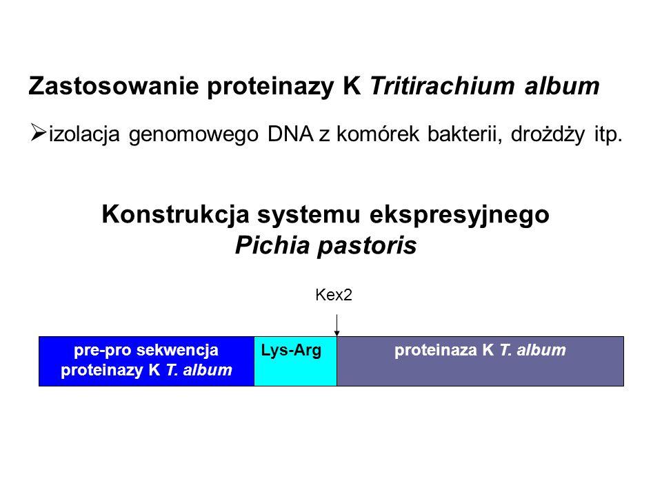 Konstrukcja systemu ekspresyjnego Pichia pastoris pre-pro sekwencja proteinazy K T. album Lys-Arg Kex2 proteinaza K T. album Zastosowanie proteinazy K