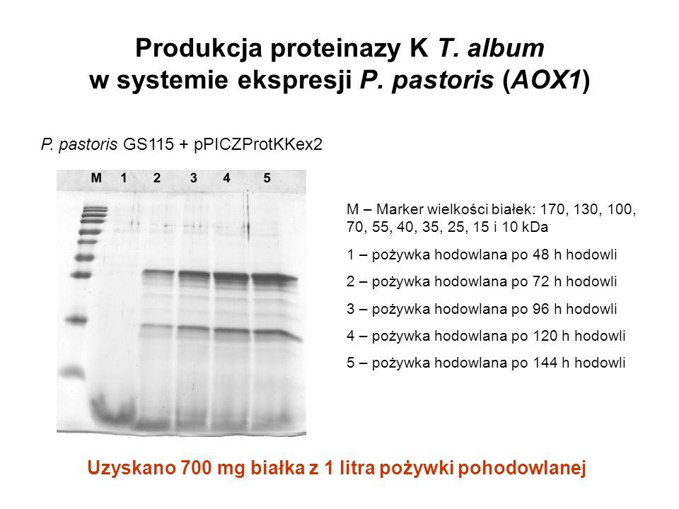 Produkcja proteinazy K T. album w systemie ekspresji P. pastoris (AOX1) M – Marker wielkości białek: 170, 130, 100, 70, 55, 40, 35, 25, 15 i 10 kDa 1