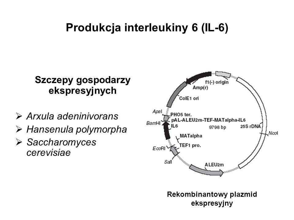 Produkcja interleukiny 6 (IL-6) Szczepy gospodarzy ekspresyjnych Arxula adeninivorans Hansenula polymorpha Saccharomyces cerevisiae Rekombinantowy pla