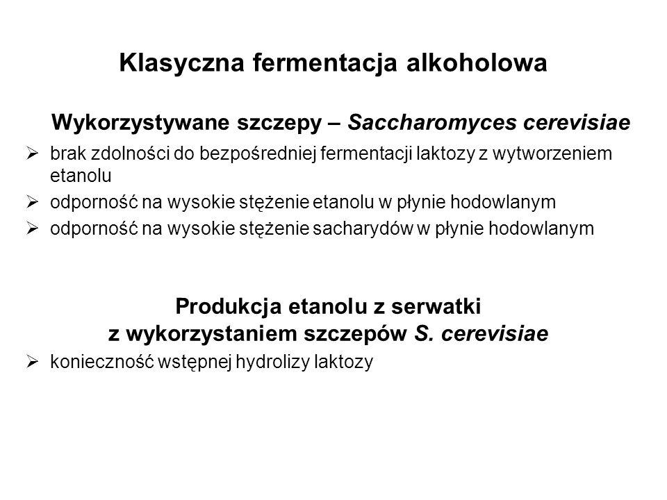 Klasyczna fermentacja alkoholowa Wykorzystywane szczepy – Saccharomyces cerevisiae brak zdolności do bezpośredniej fermentacji laktozy z wytworzeniem etanolu odporność na wysokie stężenie etanolu w płynie hodowlanym odporność na wysokie stężenie sacharydów w płynie hodowlanym Produkcja etanolu z serwatki z wykorzystaniem szczepów S.