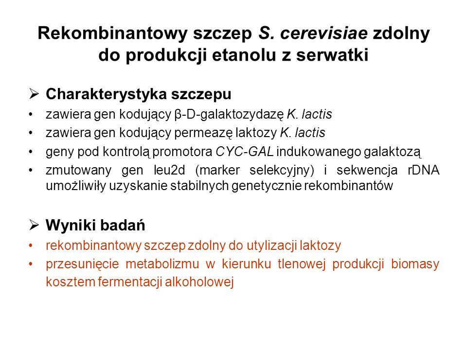 Rekombinantowy szczep S. cerevisiae zdolny do produkcji etanolu z serwatki Charakterystyka szczepu zawiera gen kodujący β-D-galaktozydazę K. lactis za