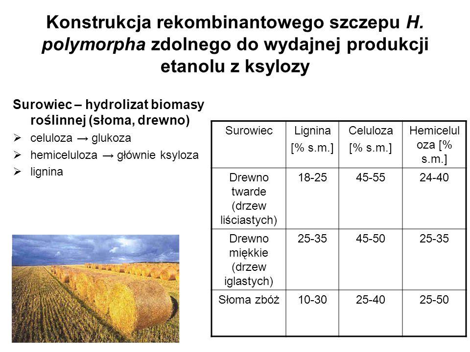 Konstrukcja rekombinantowego szczepu H. polymorpha zdolnego do wydajnej produkcji etanolu z ksylozy Surowiec – hydrolizat biomasy roślinnej (słoma, dr