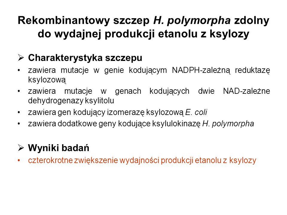 Rekombinantowy szczep H. polymorpha zdolny do wydajnej produkcji etanolu z ksylozy Charakterystyka szczepu zawiera mutacje w genie kodującym NADPH-zal