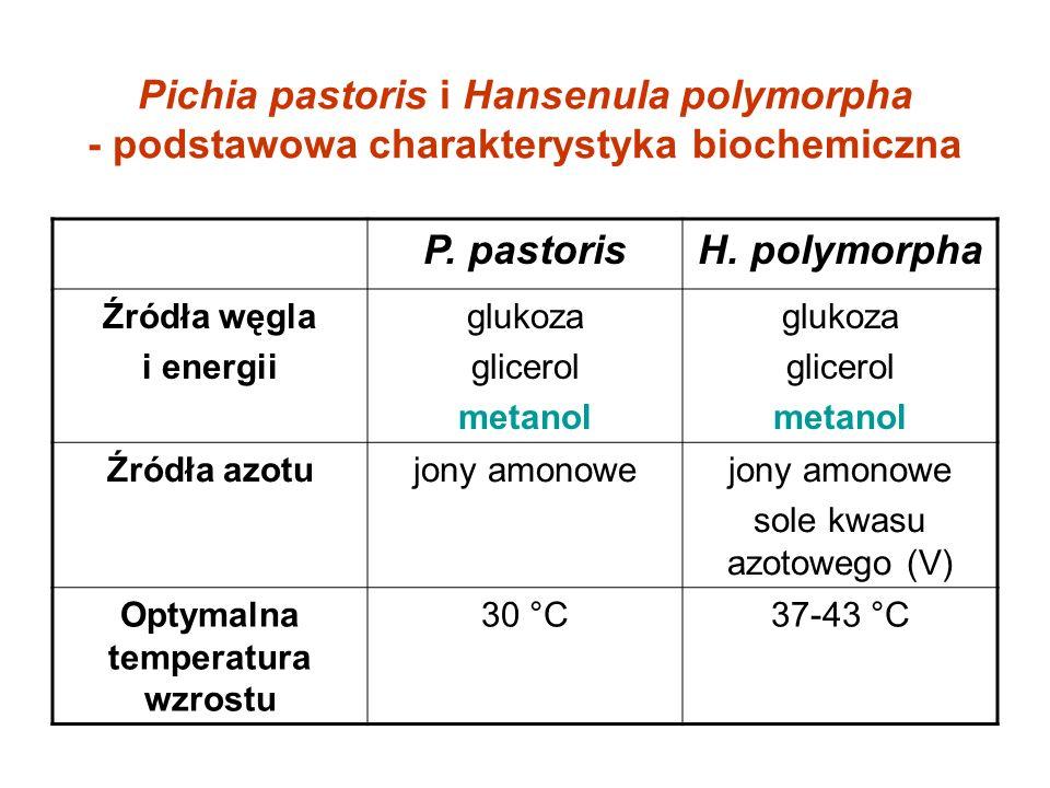 Pichia pastoris i Hansenula polymorpha - podstawowa charakterystyka biochemiczna P. pastorisH. polymorpha Źródła węgla i energii glukoza glicerol meta
