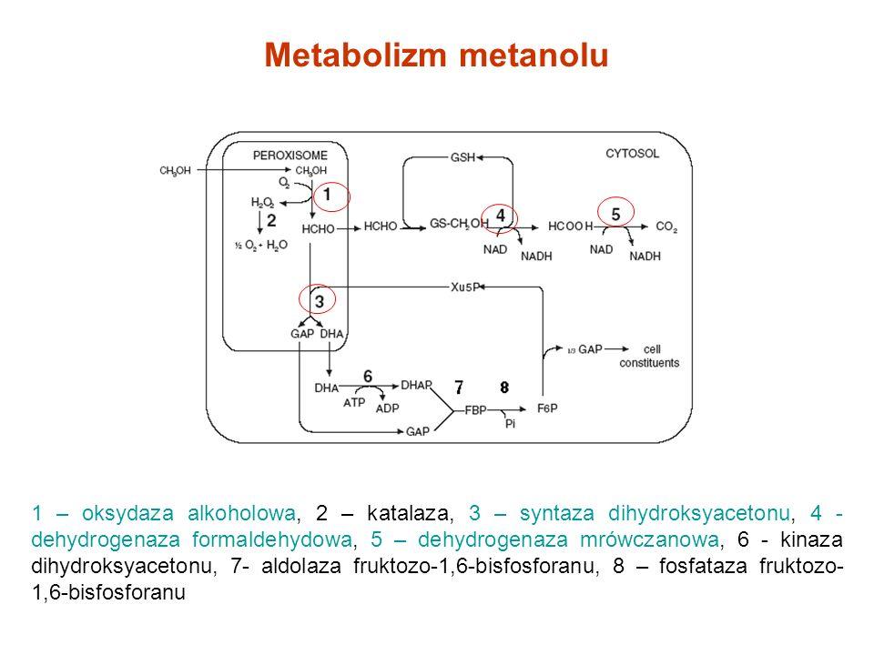 Konstrukcja systemu ekspresyjnego Pichia pastoris pre-pro sekwencja proteinazy K T.