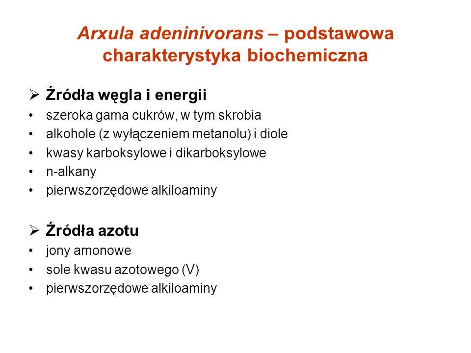 Arxula adeninivorans – podstawowa charakterystyka biochemiczna Źródła węgla i energii szeroka gama cukrów, w tym skrobia alkohole (z wyłączeniem metanolu) i diole kwasy karboksylowe i dikarboksylowe n-alkany pierwszorzędowe alkiloaminy Źródła azotu jony amonowe sole kwasu azotowego (V) pierwszorzędowe alkiloaminy